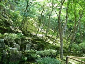 Arashiyama woodland