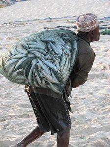 Omani man hauling sardines