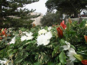 Mdina flowering shrubbery