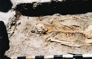 human remains found in archaeological dig