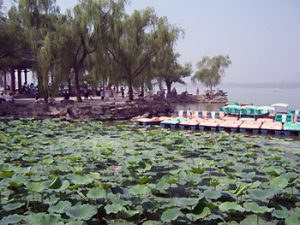 Lily pads on lake at Summer Palace