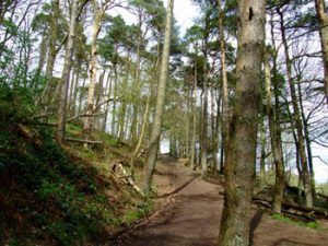 tree-lined path leads to Belfast Castle