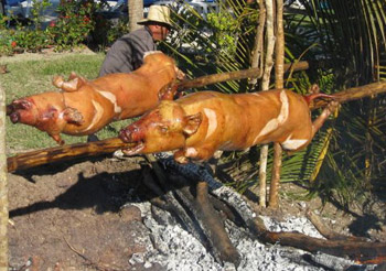 whole pigs roasting on spits over fire