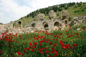 flowers in front of Roman ruins