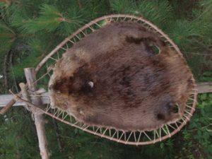 beaver pelt at fur post museum