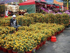 narcissus flowers for good luck at lunar new year in Hong Kong