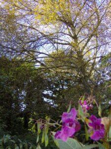 wildflower meadow near Kirkstall abbey