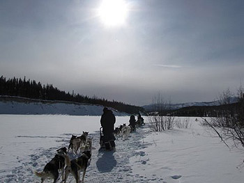 dogsled teams in snow