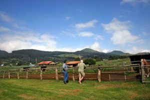 fence at Parker Ranch, Hawaii