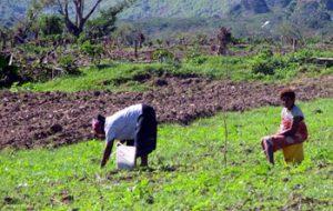 farmers in Fiji village