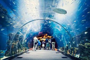 underwater zoo at Dubai mall